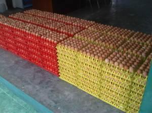 Telur-di-Gudang.jpg